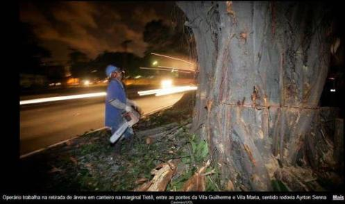 Árvore cortada na Marginal Tietê.